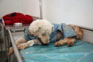 Cachorro recebendo atendimento no Hospital Veterinário do DF