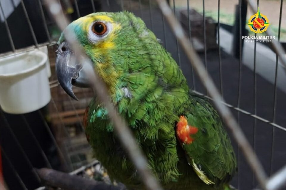 PMDF apreende aves silvestres